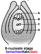 Samacheer Kalvi 12 Bio Botany Solutions Chapter 1 Asexual And Sexual Reproduction In Plants