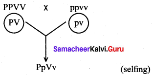 Samacheer Kalvi 12th Bio Botany Solutions Chapter 3 Chromosomal Basis of Inheritance img 2