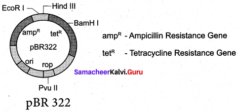 Samacheer Kalvi 12th Bio Botany Solutions Chapter 4 Principles and Processes of Biotechnology img 1