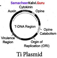 Samacheer Kalvi 12th Bio Botany Solutions Chapter 4 Principles and Processes of Biotechnology img 4