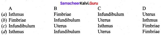 Samacheer Kalvi 12th Bio Zoology Solutions Chapter 2 Human Reproduction img 10