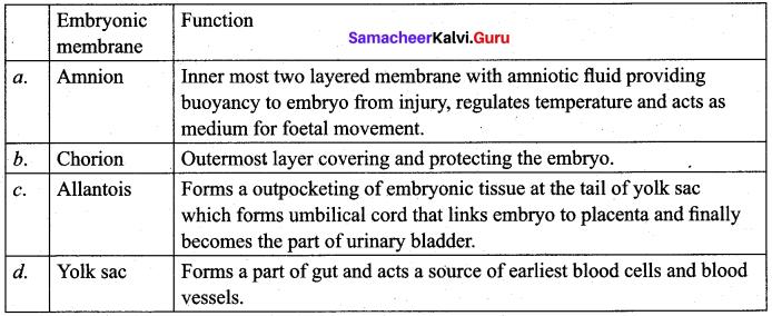 Samacheer Kalvi 12th Bio Zoology Solutions Chapter 2 Human Reproduction img 15