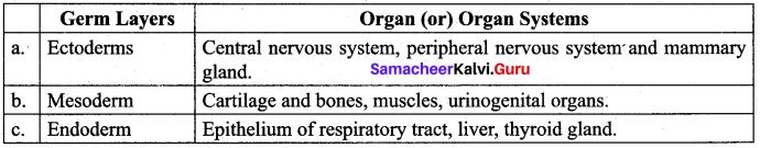 Samacheer Kalvi 12th Bio Zoology Solutions Chapter 2 Human Reproduction img 16