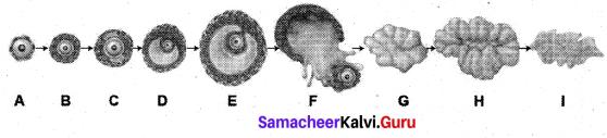 Samacheer Kalvi 12th Bio Zoology Solutions Chapter 2 Human Reproduction img 5