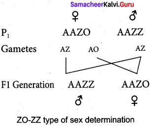 Samacheer Kalvi 12th Bio Zoology Solutions Chapter 4 Principles of Inheritance and Variation img 14