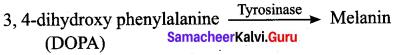 Samacheer Kalvi 12th Bio Zoology Solutions Chapter 4 Principles of Inheritance and Variation img 16