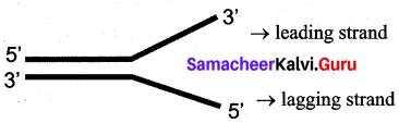 Samacheer Kalvi 12th Bio Zoology Solutions Chapter 5 Molecular Genetics img 2