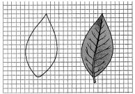 Samacheer Kalvi 7th Science Guide Term 1 Chapter 1 Measurement