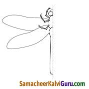 Samacheer Kalvi 4th Maths Guide Term 2 Chapter 1 வடிவியல் Intext Questions 1