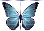 Samacheer Kalvi 4th Maths Guide Term 2 Chapter 1 வடிவியல் Intext Questions 17
