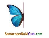 Samacheer Kalvi 4th Maths Guide Term 2 Chapter 1 வடிவியல் Intext Questions 5