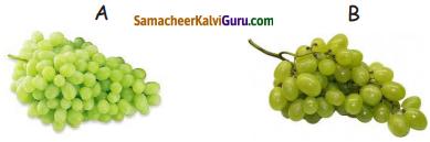 Samacheer Kalvi 5th Maths Guide Term 3 Chapter 2 எண்கள் InText Questions 1