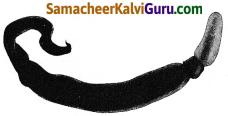 Samacheer Kalvi 9th Science Guide Chapter 17 விலங்குலகம் 4