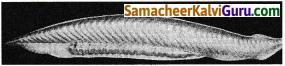 Samacheer Kalvi 9th Science Guide Chapter 17 விலங்குலகம் 5
