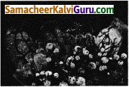 Samacheer Kalvi 9th Science Guide Chapter 17 விலங்குலகம் 6