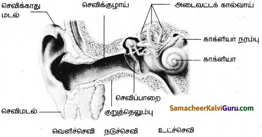 Samacheer Kalvi 9th Science Guide Chapter 8 ஒலி 11