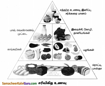 Samacheer Kalvi 8th Science Guide Chapter 20 வளரிளம் பருவமடைதல் 3