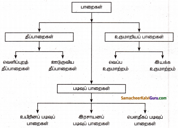 Samacheer Kalvi 8th Social Science Guide Geography Chapter 1 பாறை மற்றும் மண் 12
