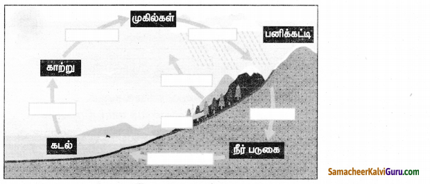 Samacheer Kalvi 8th Social Science Guide Geography Chapter 3 நீரியல் சுழற்சி 4