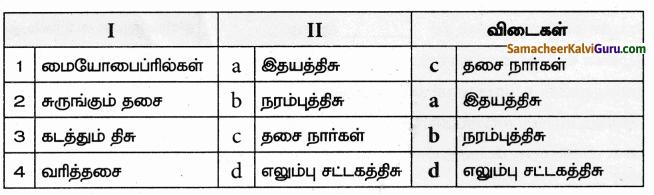 Samacheer Kalvi 9th Science Guide Chapter 18 திசுக்களின் அமைப்பு 60