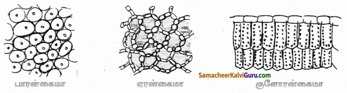 Samacheer Kalvi 9th Science Guide Chapter 18 திசுக்களின் அமைப்பு 65
