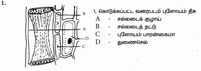 Samacheer Kalvi 9th Science Guide Chapter 18 திசுக்களின் அமைப்பு 75