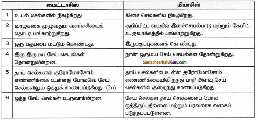 Samacheer Kalvi 9th Science Guide Chapter 18 திசுக்களின் அமைப்பு 78