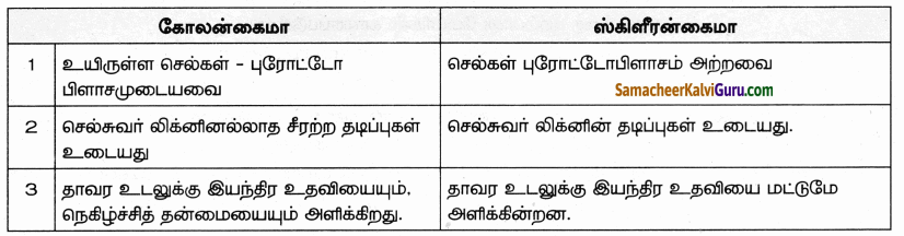 Samacheer Kalvi 9th Science Guide Chapter 18 திசுக்களின் அமைப்பு 80