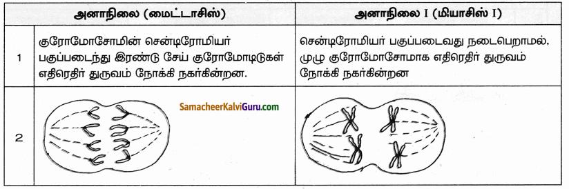 Samacheer Kalvi 9th Science Guide Chapter 18 திசுக்களின் அமைப்பு 86