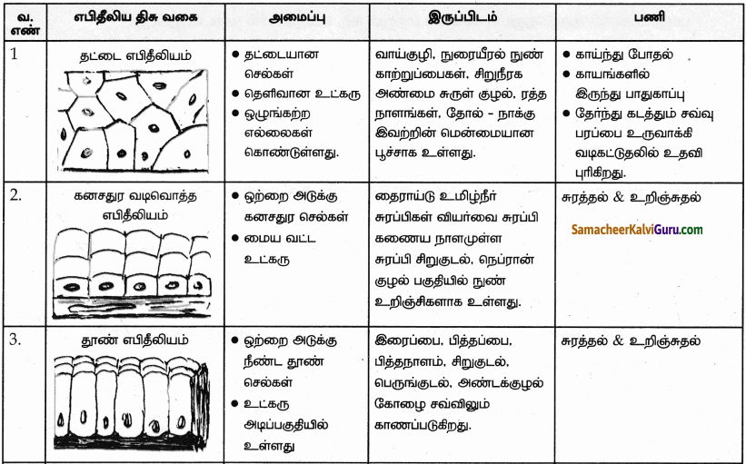Samacheer Kalvi 9th Science Guide Chapter 18 திசுக்களின் அமைப்பு 89