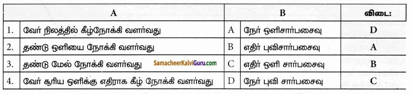 Samacheer Kalvi 9th Science Guide Chapter 19 தாவர உலகம் – தாவர செயலியல் 30