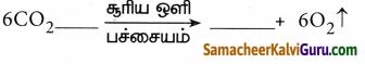 Samacheer Kalvi 9th Science Guide Chapter 19 தாவர உலகம் – தாவர செயலியல் 70