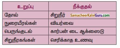 Samacheer Kalvi 9th Science Guide Chapter 20 விலங்குகளின் உறுப்பு மண்டலங்கள் 35