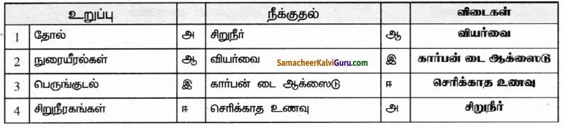 Samacheer Kalvi 9th Science Guide Chapter 20 விலங்குகளின் உறுப்பு மண்டலங்கள் 36