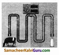 Samacheer Kalvi 9th Science Guide Chapter 21 ஊட்டச்சத்து மற்றும் ஆரோக்கியம் 86