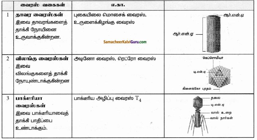 Samacheer Kalvi 9th Science Guide Chapter 22 நுண்ணுயிரிகளின் உலகம் 41