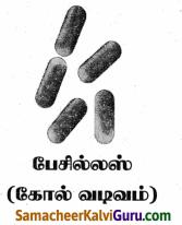 Samacheer Kalvi 9th Science Guide Chapter 22 நுண்ணுயிரிகளின் உலகம் 70