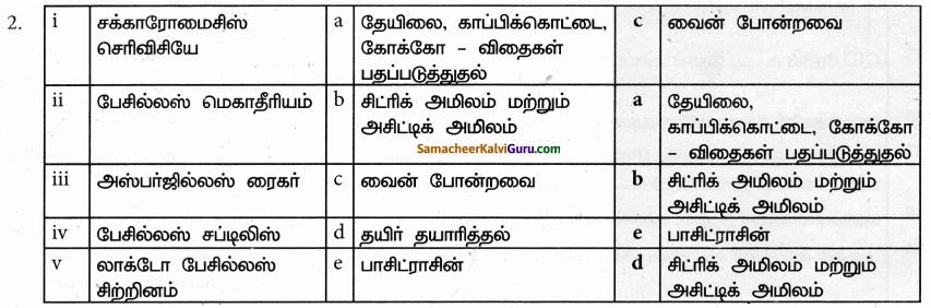 Samacheer Kalvi 9th Science Guide Chapter 22 நுண்ணுயிரிகளின் உலகம் 81