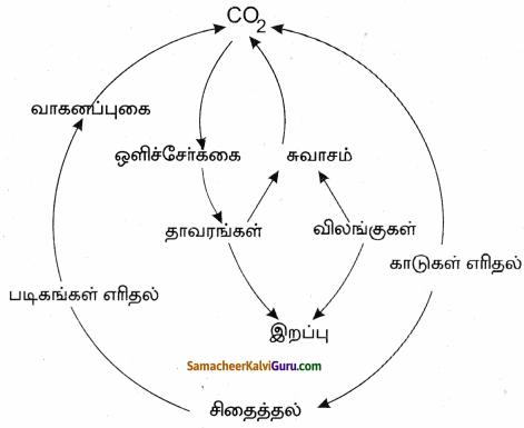 Samacheer Kalvi 9th Science Guide Chapter 24 சூழ்நிலை அறிவியல் 76