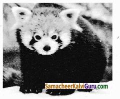 Samacheer Kalvi 9th Science Guide Chapter 24 சூழ்நிலை அறிவியல் 86