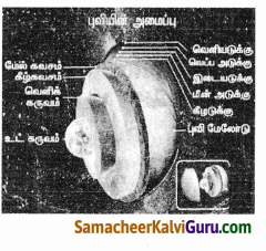Samacheer Kalvi 9th Social Science Guide Geography Chapter 1 நிலக்கோளம் – I புவி அகச்செயல்பாடுகள் 100