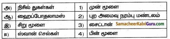 Samacheer Kalvi 10th Science Guide Chapter 15 நரம்பு மண்டலம் 60