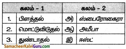 Samacheer Kalvi 10th Science Guide Chapter 17 தாவரங்கள் மற்றும் விலங்குகளில் இனப்பெருக்கம் 30