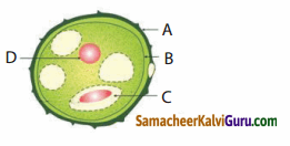Samacheer Kalvi 10th Science Guide Chapter 17 தாவரங்கள் மற்றும் விலங்குகளில் இனப்பெருக்கம் 70