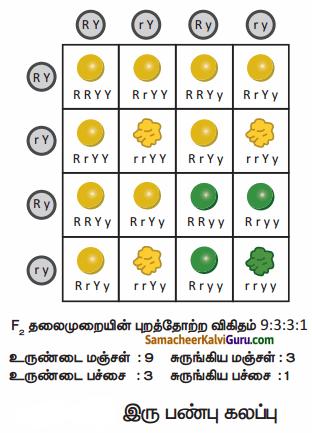 Samacheer Kalvi 10th Science Guide Chapter 18 மரபியல் 89.1