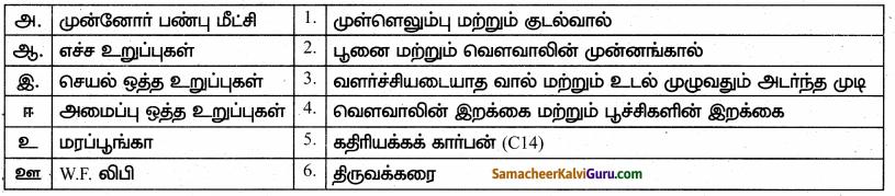 Samacheer Kalvi 10th Science Guide Chapter 19 உயிரின் தோற்றமும் பரிணாமமும் 20