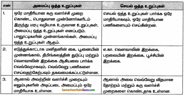 Samacheer Kalvi 10th Science Guide Chapter 19 உயிரின் தோற்றமும் பரிணாமமும் 90