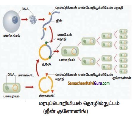 Samacheer Kalvi 10th Science Guide Chapter 20 இனக்கலப்பு மற்றும் உயிரித்தொழில்நுட்பவியல் 6