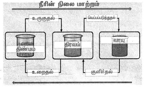 Samacheer Kalvi 4th Science Guide Term 2 Chapter 2 நீர் 6