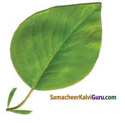 Samacheer Kalvi 4th Science Guide Term 2 Chapter 3 தாவரங்கள் 1
